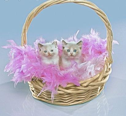 Kočky v košíku.png
