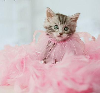 Hezoučká kočička.png
