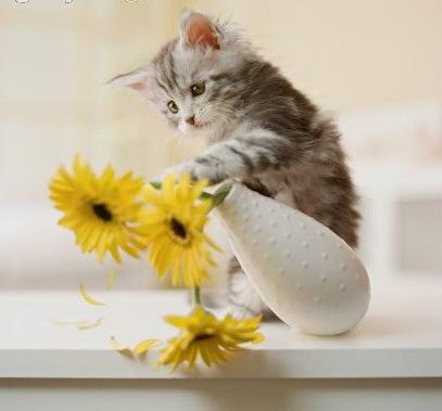 Kočička s vázou.png